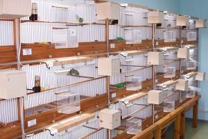 Вентиляция в питомнике птиц