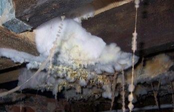 Плесень в погребе (грибок в подвале дома): как избавиться, убрать?