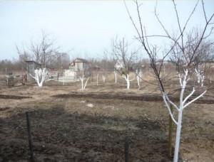 подготовка дачи весной к сезону, участок