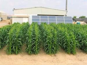 использование солнечной энергии для сельского хозяйства