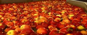 как сделать вентиляцию фруктохранилища