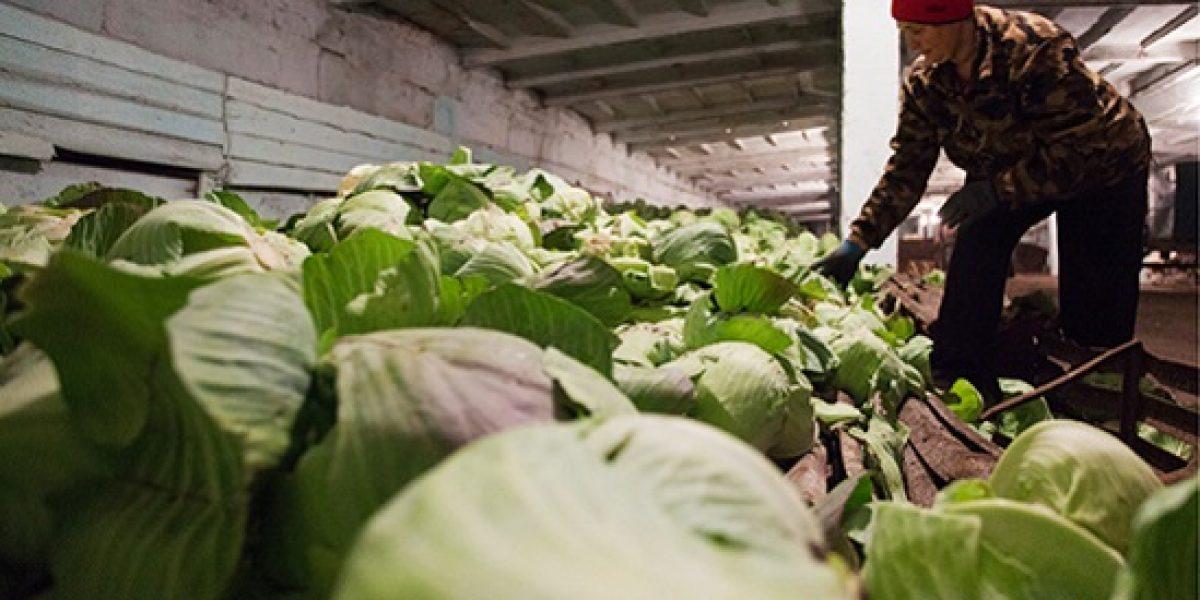 борьба с повышенной влажностью на овощебазе