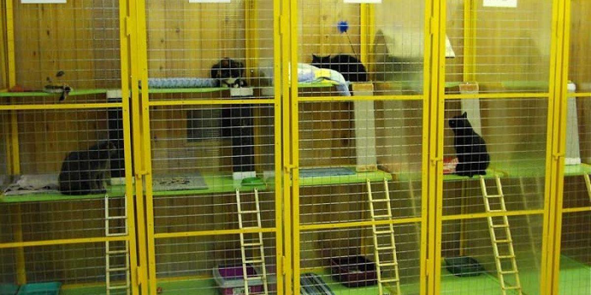 как проветрить помещение для животных
