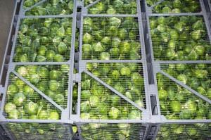 Отопление овощебаз и овощехранилищ