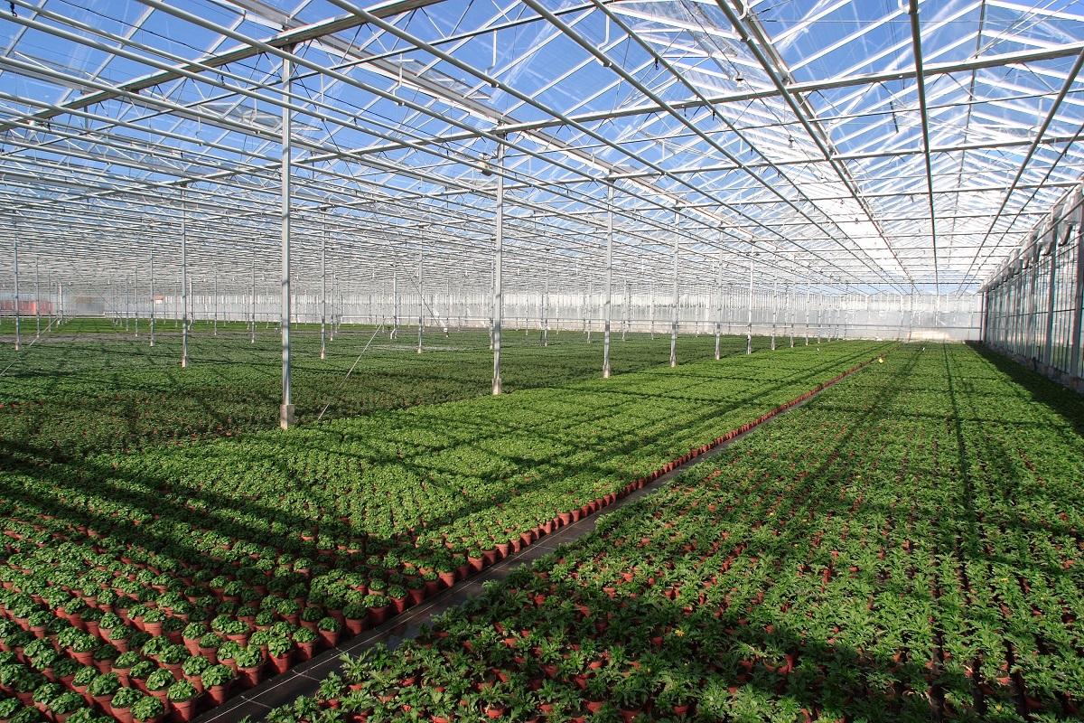 Строительство теплицы для выращивание 676