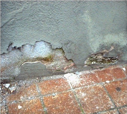 Плесень и стена мокрая