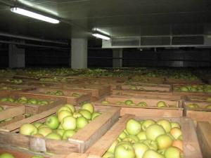 вентиляция фруктохранилища